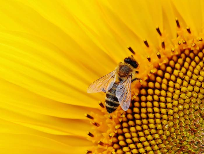 7 Strategies You Should Use to Increase Productivity - A Honeybee on a Sun Flower