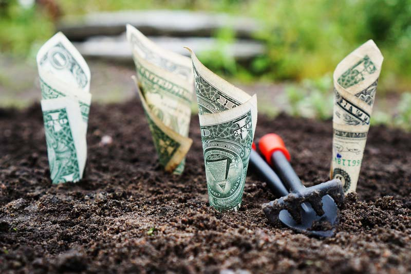 Analogy of Money being planted for Financial Growth
